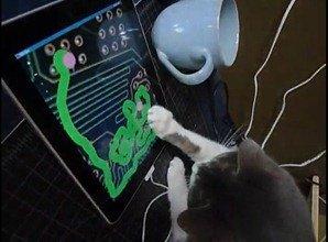 Cat iPad