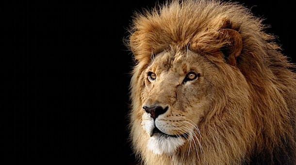 Mac OS X 10.7 Lion Now Available to Developers!