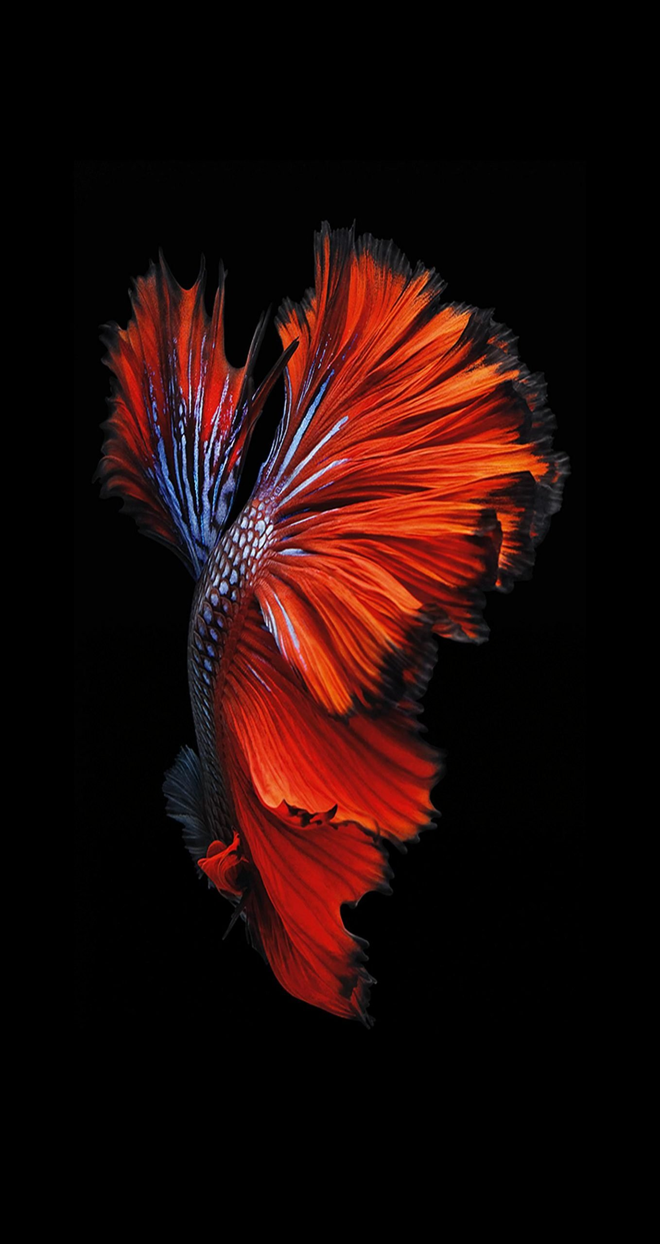 Download Iphone 6s 6s Plus Wallpapers