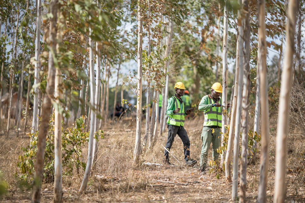 Apple announces first-ever $200 million fund aimed at restoring forests